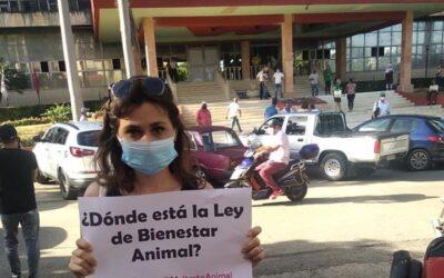 Miembros del movimiento animalista independiente cubano protestan frente al Ministerio de Agricultura