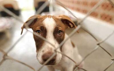 El Decreto-Ley sobre Bienestar Animal en Cuba todavía es una incógnita